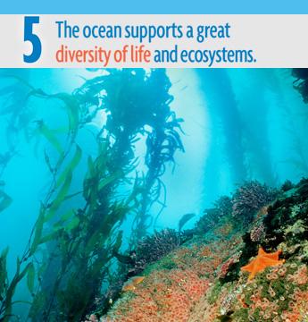Ocean Literacy Principle #5